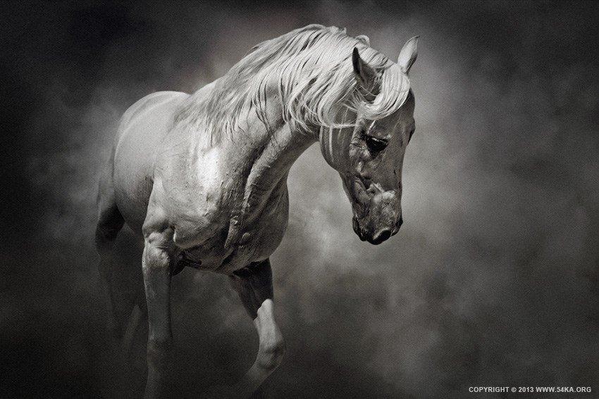 Risultati immagini per foto in bianco e nero e a coliri di animali