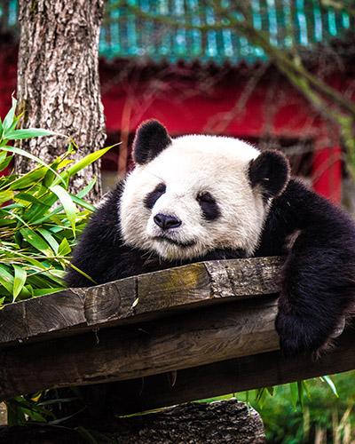 The Panda Update